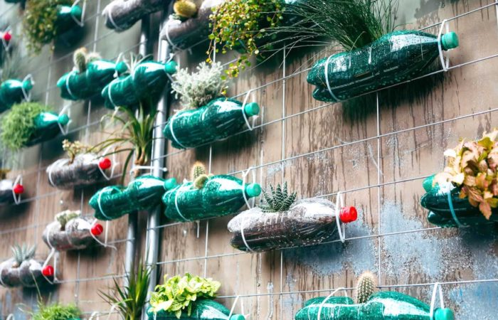 Second life of a plastic bottles, as a pots for plants. A lot of flowers and cactus inside the bottles in the ground. Composition on a wall as a modern design element